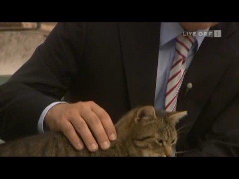 faymann und die katze