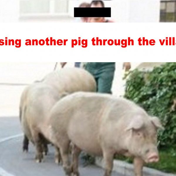 """Chasing another pig through the village."""