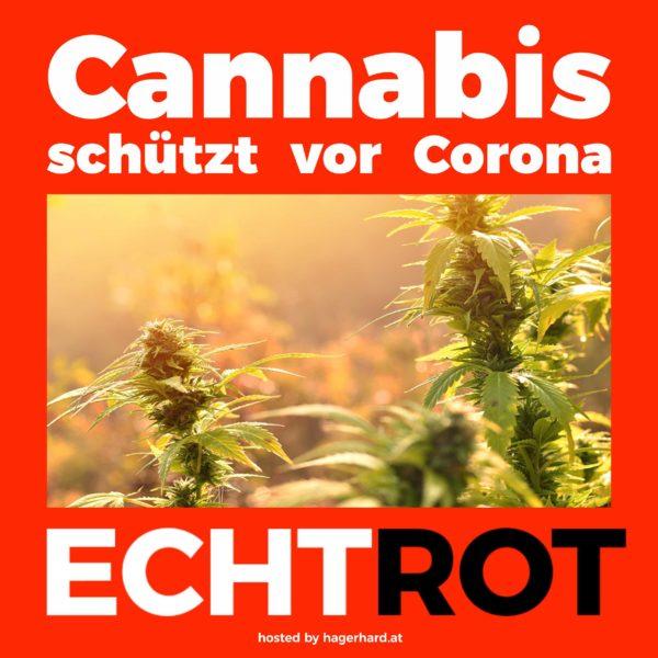 cannabis schützt - möglicherweise - vor coronavirus